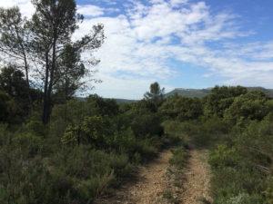 Le terrain avant vue vers le sud